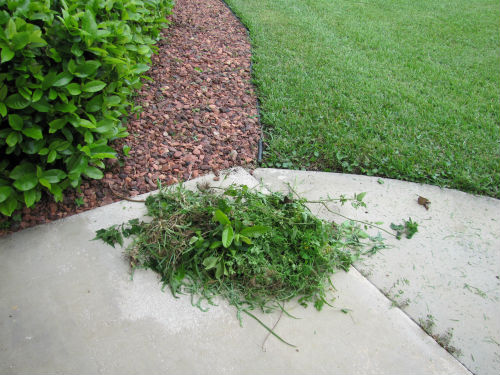 how to stop weeds growing on your padding